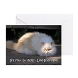 Cat with Attitude Birthday Greeting Cards