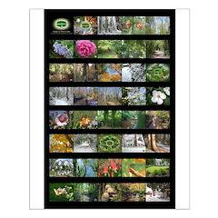 16X20 Chesapeake Arboretum calendar images poster