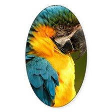 macaw, yellow and gold Decal
