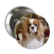 "Cavalier King Charles Spaniel 2.25"" Button (100 pa"
