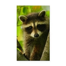 raccoon Rectangle Car Magnet