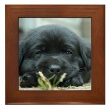 Back Lab Puppy Framed Tile