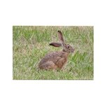 Jackrabbit Rectangle Magnet (100 pack)