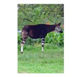 okapi Postcards (Package of 8)