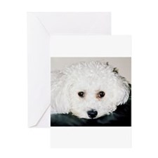 BICHON PUPPY FACE Greeting Cards