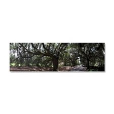 Old South neighborhood in South  Car Magnet 10 x 3
