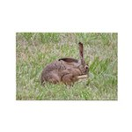 Blacktailed Jackrabbit Rectangle Magnet