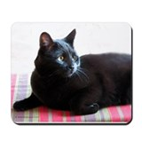 Black Cat Beauty Mousepad