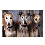 Greyhounds Three Postcards (Package of 8)