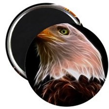 American Bald Eagle Head Magnets