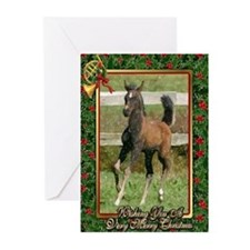 Arabian Horse Foal Christmas Greeting Cards