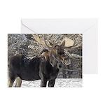Moose Greeting Cards (Pk of 10)