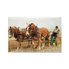 Cute Shire draft horse Rectangle Magnet
