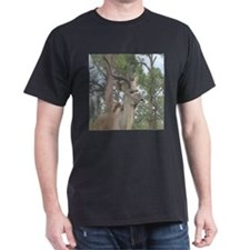 Greater Kudu series 2 T-Shirt