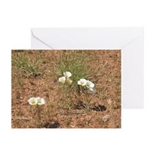 White Wildflower Greeting Cards (Pk of 10)