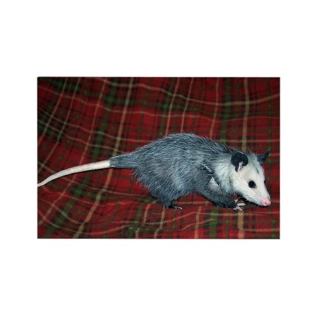 Possum on Plaid Rectangle Magnet