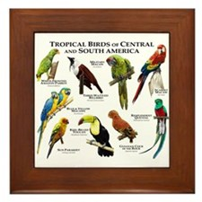 Tropical Birds of Central and South America Framed