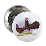 Red Leghorn Chickens 2.25