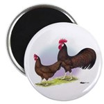Red Leghorn Chickens Magnet