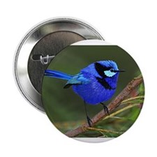 "Blue Wren 2.25"" Button (100 pack)"