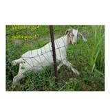 Whats Got Your Goat Postcards (Package of 8)