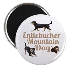 Entlebucher Mountain Dog Magnets