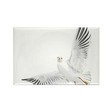Bird, Dove, Peace Magnets