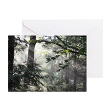 Mistbeams Greeting Cards (Pk of 20)