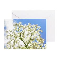 Elderflower Sky Greeting Cards (Pk of 20)