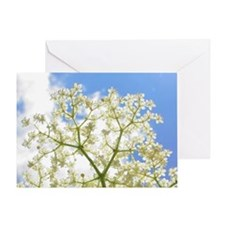 Elderflower Sky Greeting Card