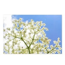 Elderflower Sky Postcards (Pk of 8)