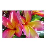 Pink Yellow Plumeria Postcards (Package of 8)