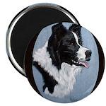 Border Collie Profile Magnet