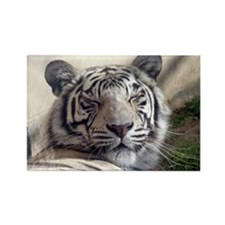 White Tiger Rectangle Magnet