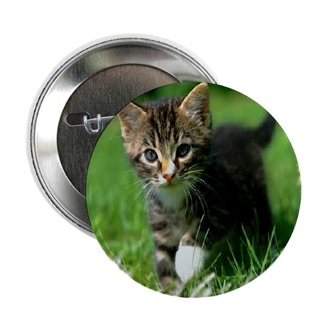 "Baby Kitten 2.25"" Button (100 pack)"