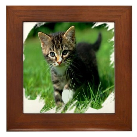 Baby Kitten Framed Tile