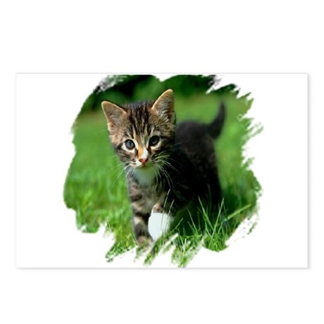 Baby Kitten Postcards (Package of 8)