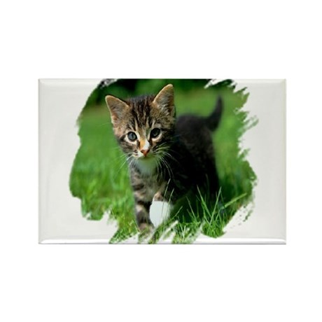 Baby Kitten Rectangle Magnet (10 pack)