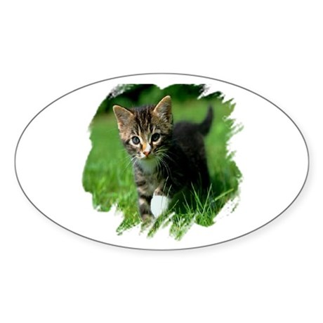 Baby Kitten Oval Sticker