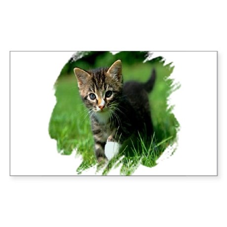Baby Kitten Rectangle Sticker