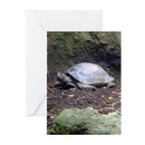 burmese tortoise Greeting Cards (Pk of 10)