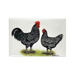 Java Rooster and Hen Rectangle Magnet (100 pack)