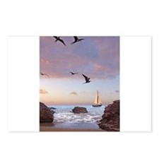 Frigate Birds Postcards (Package of 8)