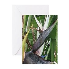 White Birds of Paradise Greeting Cards (Package of
