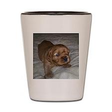 Ruby puppy Shot Glass