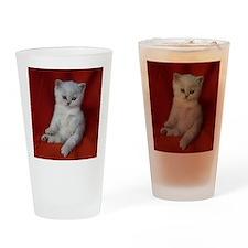 British Shorthair kitten Drinking Glass