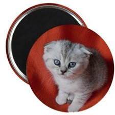 Scottish Fold Magnet