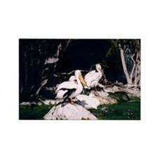 White Pelicans Rectangle Magnet