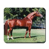 Cute Trakehner Mousepad
