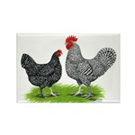 Marans Rooster and Hen Rectangle Magnet